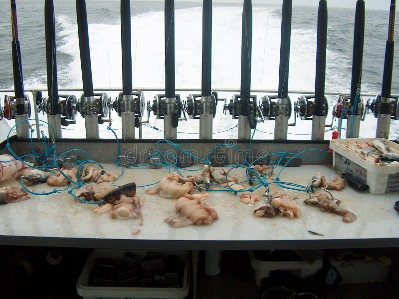 Download Halibut Fishing stock photo. Image of alaska, halibut, ocean - 894202