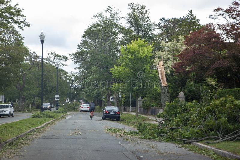 Broken trees on Young Ave stock photos