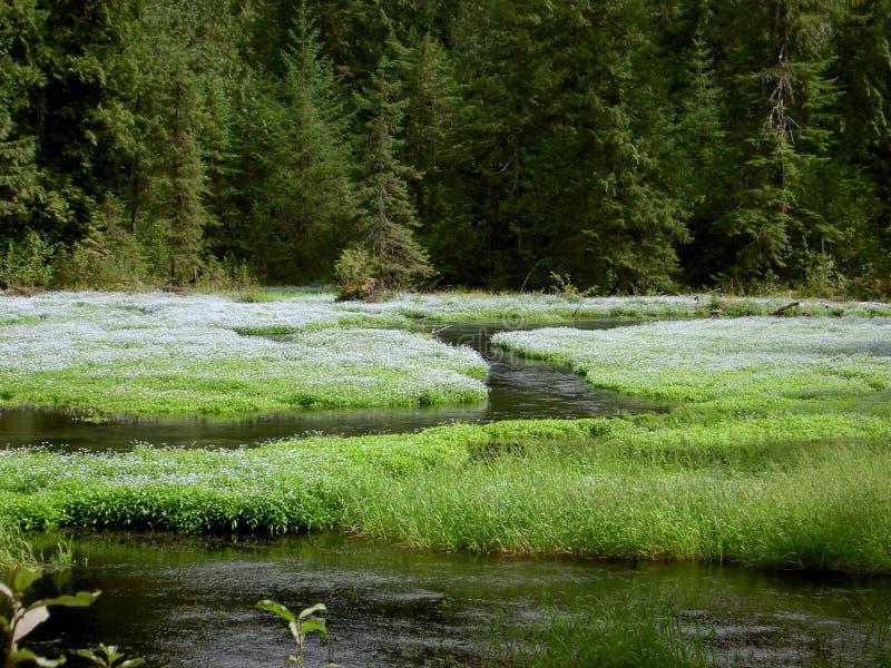Download Halizny green zdjęcie stock. Obraz złożonej z rzeka, strumie - 135632