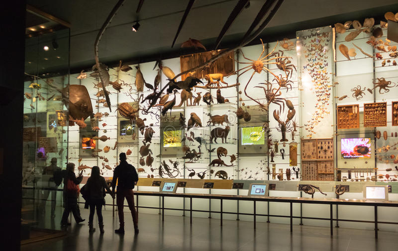 Hall of biodiversity at the American museum of Natural History AMNH - New York, USA. NEW YORK, USA - December 05, 2016: Hall of biodiversity at the American stock photography