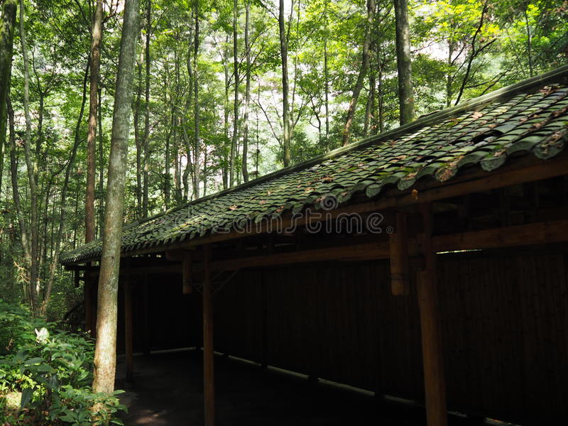 Hall im Wald stockfoto