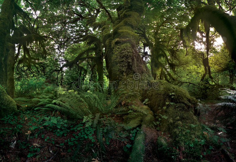 Download Hall Of Mosses Royalty Free Stock Photography - Image: 1135557