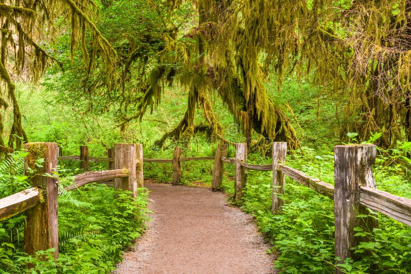 Hall of Mosses Olympic National Park. Hall of Mosses in Olympic National Park, Washington, USA royalty free stock photography