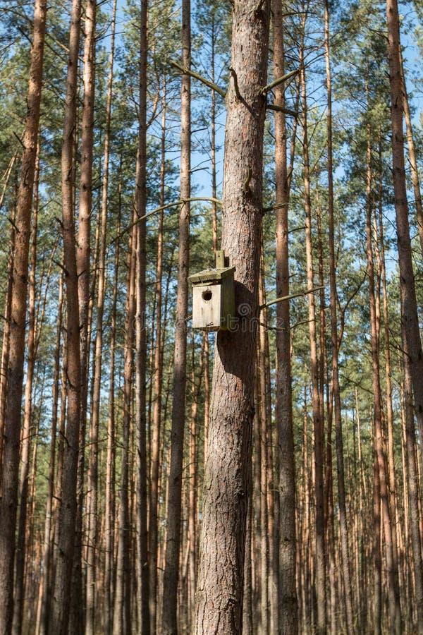 Halle für Vögel stockbild
