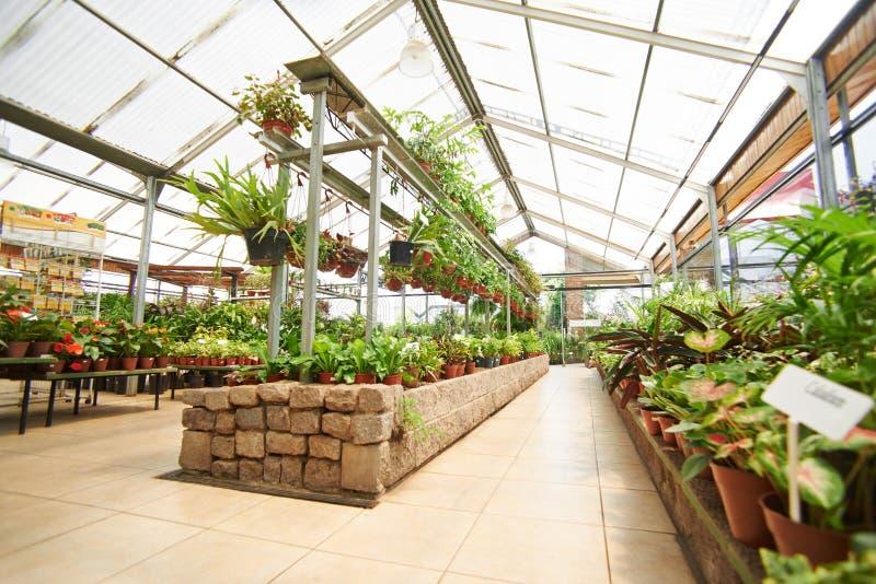 Halle mit vielen Anlagen in Garten-Center lizenzfreie stockfotos