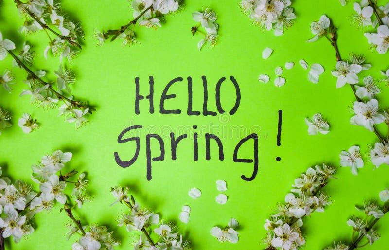 Hallo Frühlingskarte mit Kirschblütenblumen stockfoto
