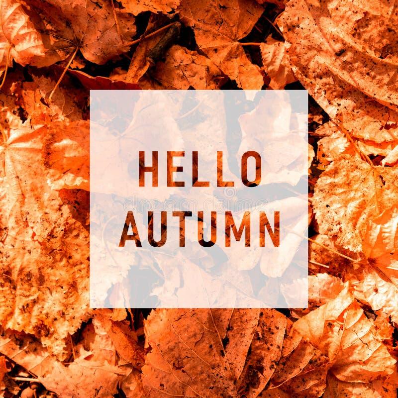 Hallo Herbst, Text auf buntem grüßend vektor abbildung