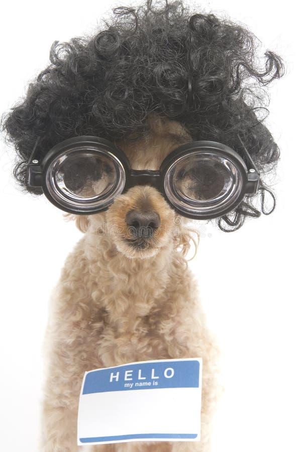 Hallo ist mein Name… Nerdy lizenzfreies stockbild