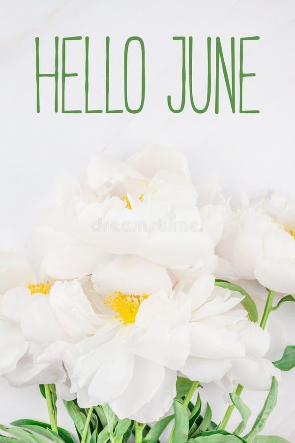 Hallo Juni-Mitteilung mit weißer Pfingstrosenblume stockfotografie