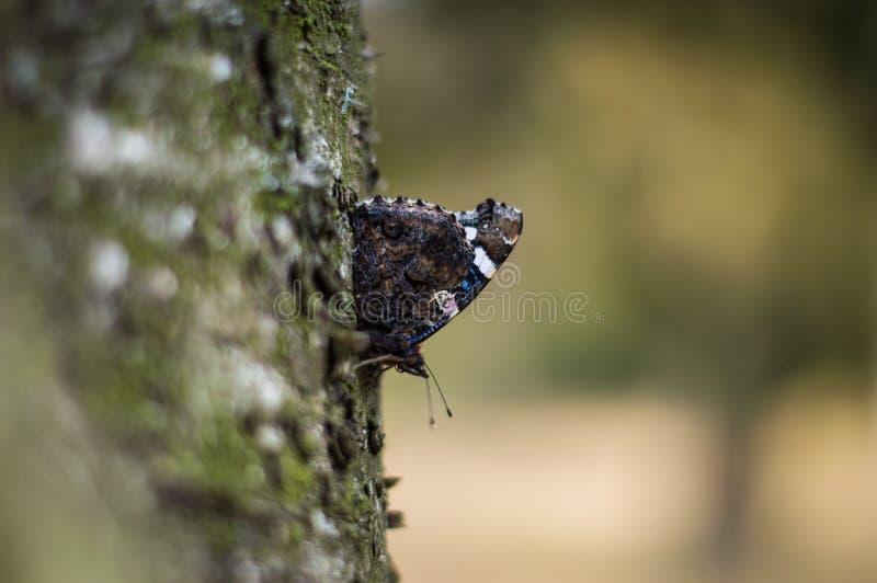 Hallo Schmetterling lizenzfreie stockfotografie