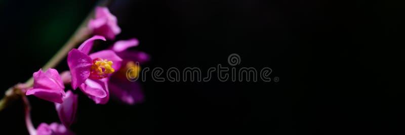 Hallo Sommerhintergrundkonzept Fahnenfeiertags-Blumenhintergrund Sch?ne rosafarbene Blume auf schwarzem Hintergrund lizenzfreie stockfotografie