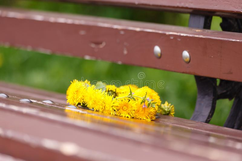 Hallo, summer. A wreath of dandelions on a wooden bench. In the Park in the summer. Romantic date, Declaration of love.  royalty free stock photo