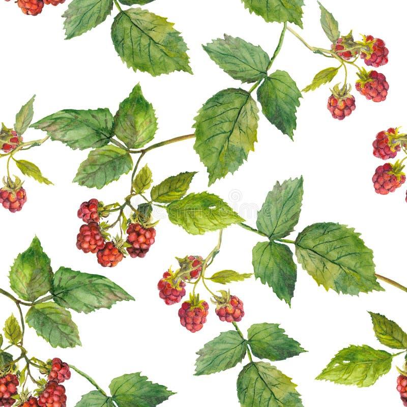 hallonbuske i den vita sömlösa mallen royaltyfri illustrationer
