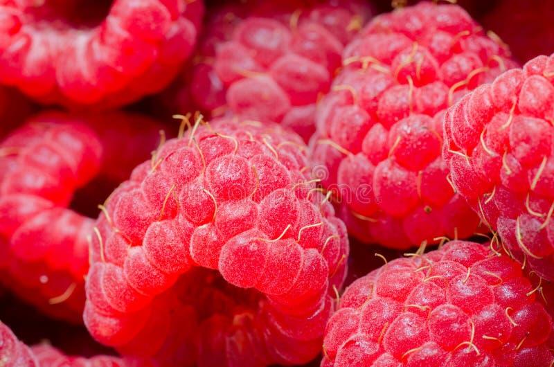 Hallonfruktslut upp bakgrund Toppen mat med vitaminer och antioxidants Storen specificerar! arkivfoton