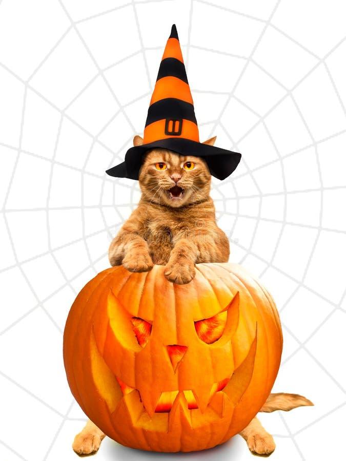 halloween Кот в костюме волшебника празднует хеллоуин стоковое фото rf