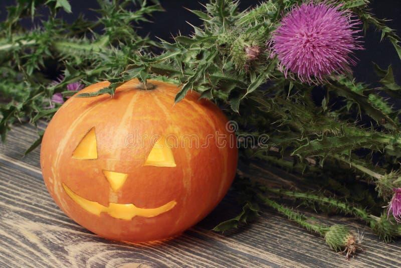 halloween Оранжевая тыква с освещенной свечой внутренней и sprig thistle Черная деревянная предпосылка стоковое фото rf