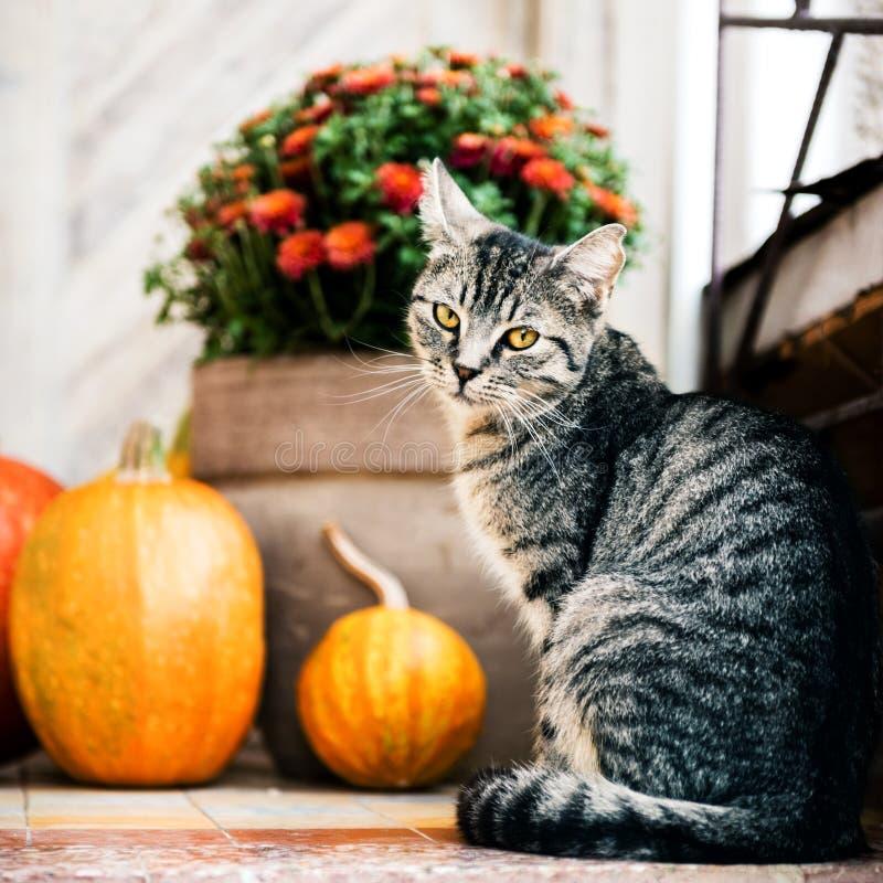 Halloween adornó la puerta principal con las diversas calabazas del tamaño y de la forma El gato en Front Porch adornó para la ac fotografía de archivo libre de regalías