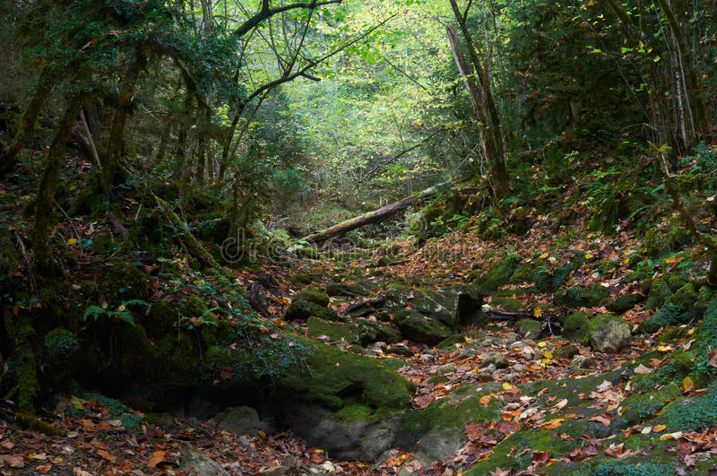 Halloween autumn mossy forest royalty free stock images
