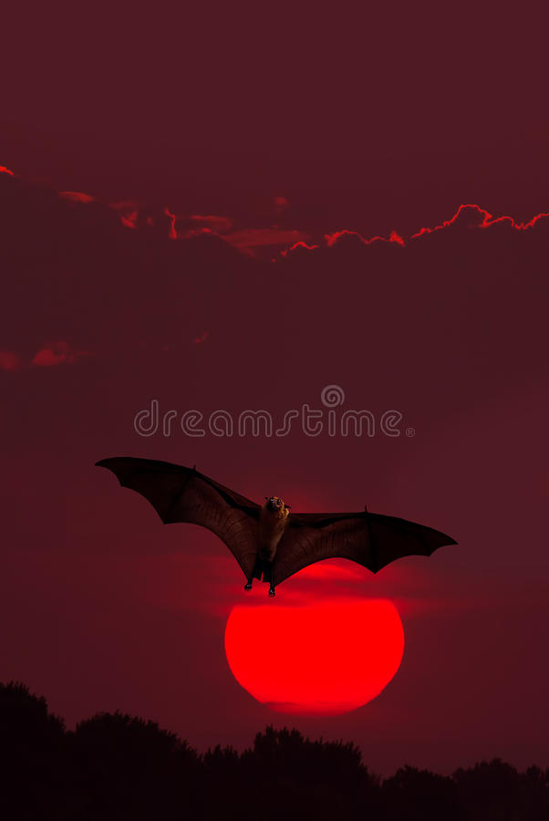 Download Halloween Background With Flying Bat Stock Image - Image of flying, bloody: 78767767