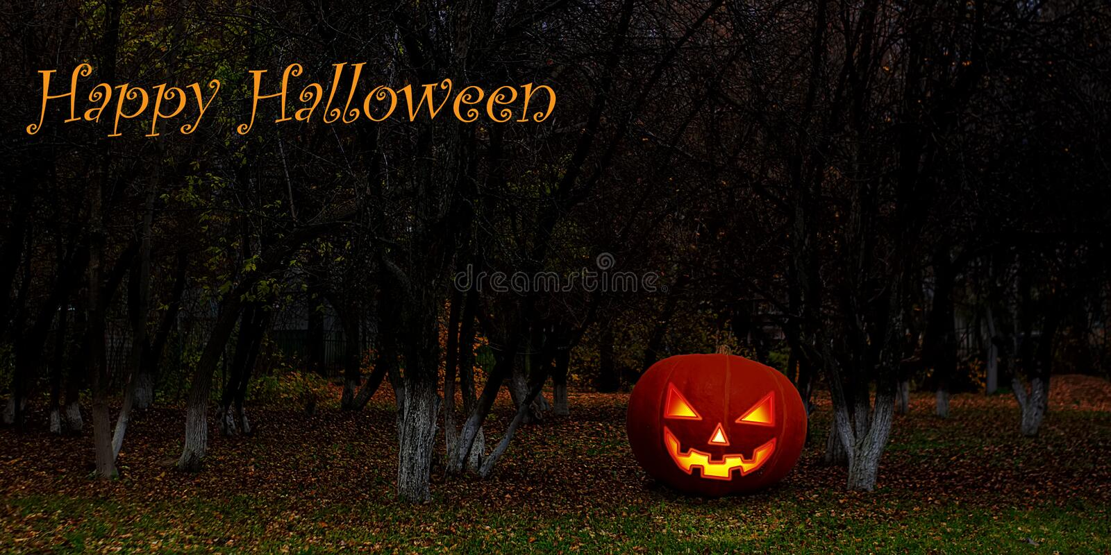 Halloween background wallpaper with pumpkin jack lantern. The sinister eyes of a pumpkin. Halloween Mystical Jack O. Pumpkin. Lantern in the Forest. Spooky royalty free stock images