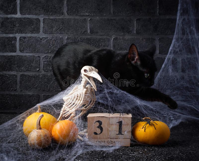 Halloween background with wooden calendar. And black cat stock photography