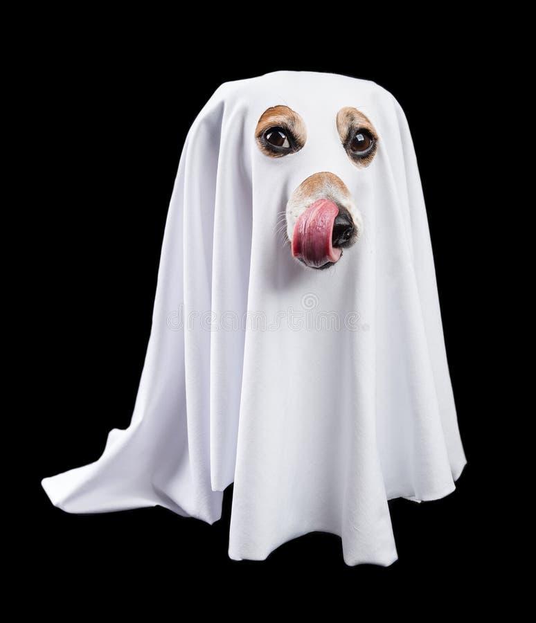 Halloween behandelt het wachten Mooi Zwart-wit hondspook stock foto