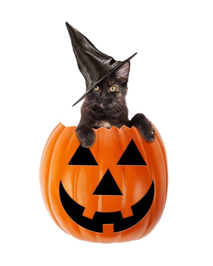 Halloween Black Cat In A Jack-O-Lantern. Cute black kitten wearing a black witch hat in a Halloween Jack-O-Lantern pumpkin royalty free stock image