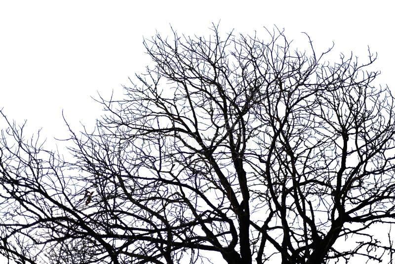 Halloween-boomtakken, op witte achtergrond worden geïsoleerd die stock foto