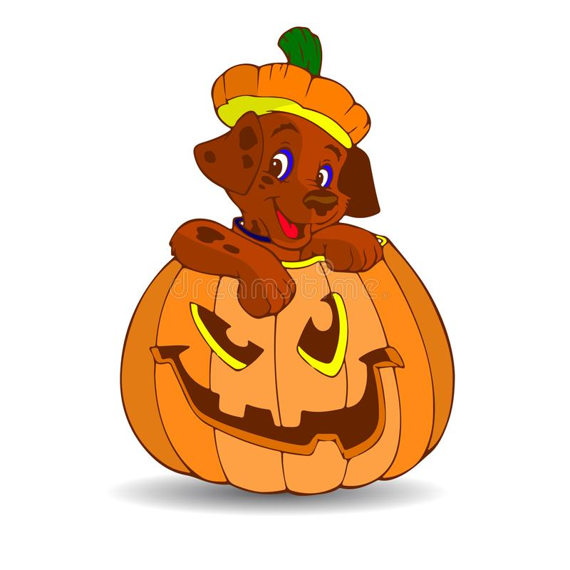 Halloween. Brown puppy sitting in a pumpkin, cartoon on a white stock illustration