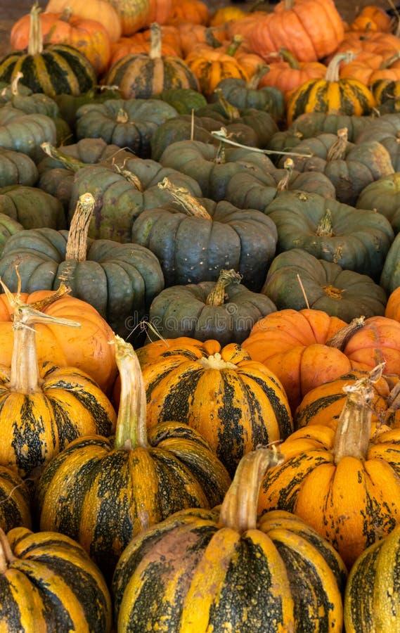 Halloween, célébration saisonnière de vacances de thanksgiving un grand choix de potirons sur l'affichage à l'arrière-plan immobi images stock