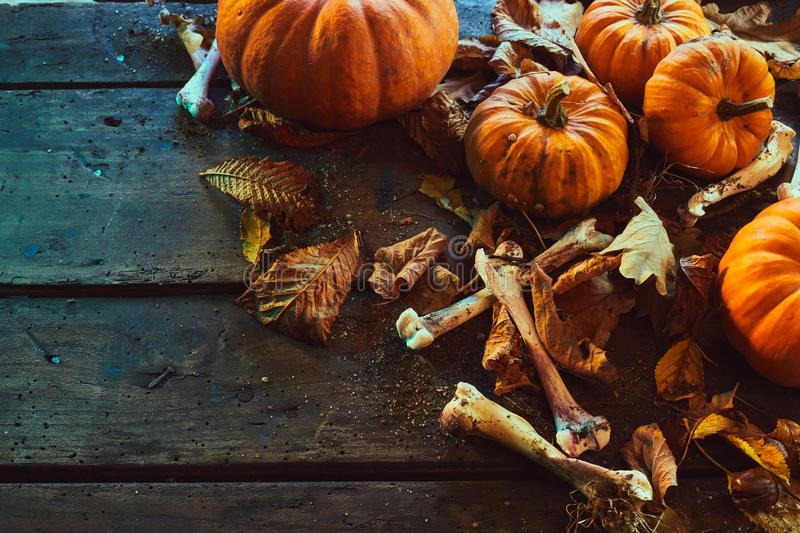 Halloween theme with bones among pumpkins stock photos