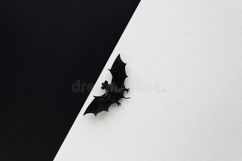 Halloween concept. Black bat between two backgrounds. Halloween concept. Small black bat between white and black backgrounds stock image