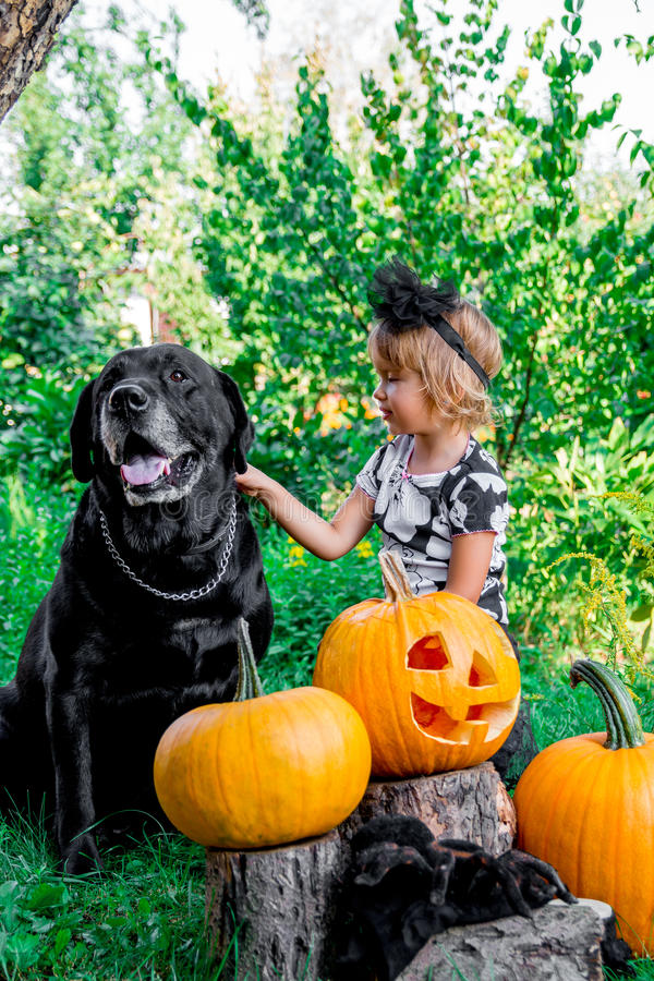 Halloween A criança vestiu-se no preto perto de Labrador entre a decoração da jaque-o-lanterna, doçura ou travessura Menina com a fotografia de stock