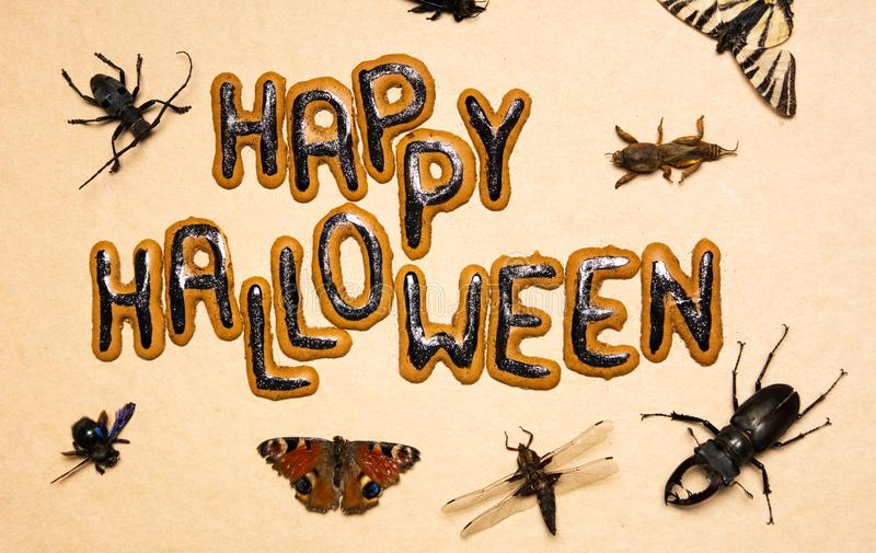 Halloween day spooky background with insects. Halloween day spooky background with dead insects royalty free stock images