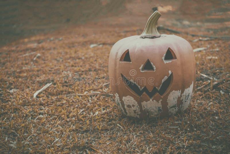 Halloween de la calabaza en el césped anaranjado fotografía de archivo libre de regalías