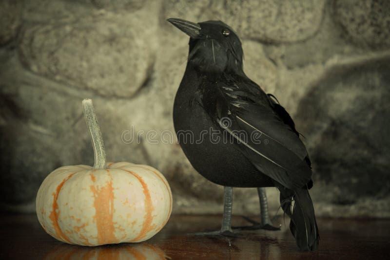 Pumpkin black crow halloween background royalty free stock photo