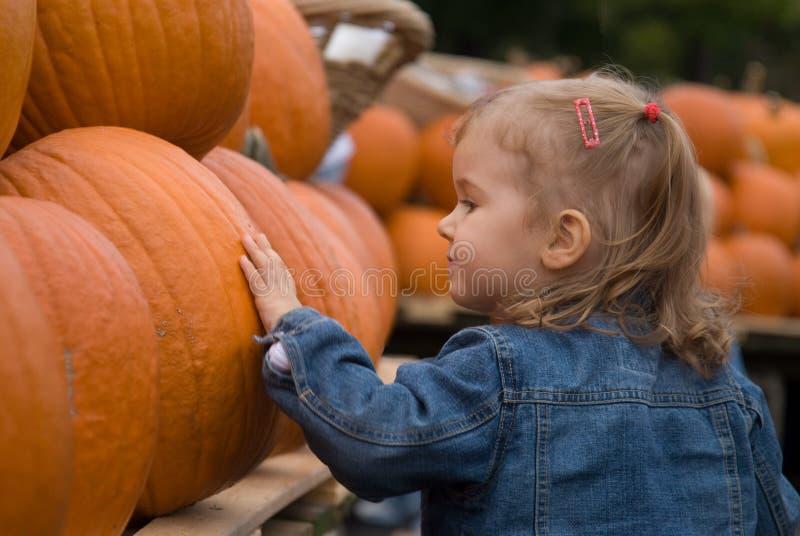 Halloween farmer's market. Cute little girl exploring Halloween pumpkins at the farmer's market stock photo