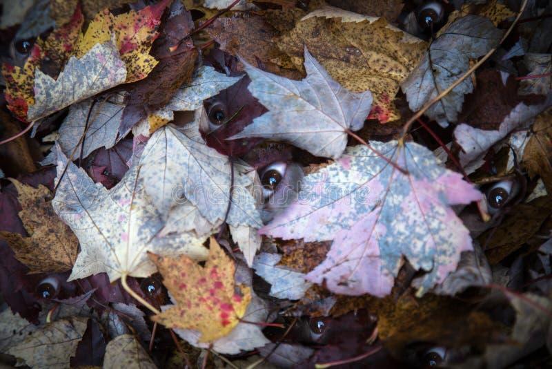 Halloween Folhas do automne dos olhos n dos monstro de Hein imagem de stock royalty free