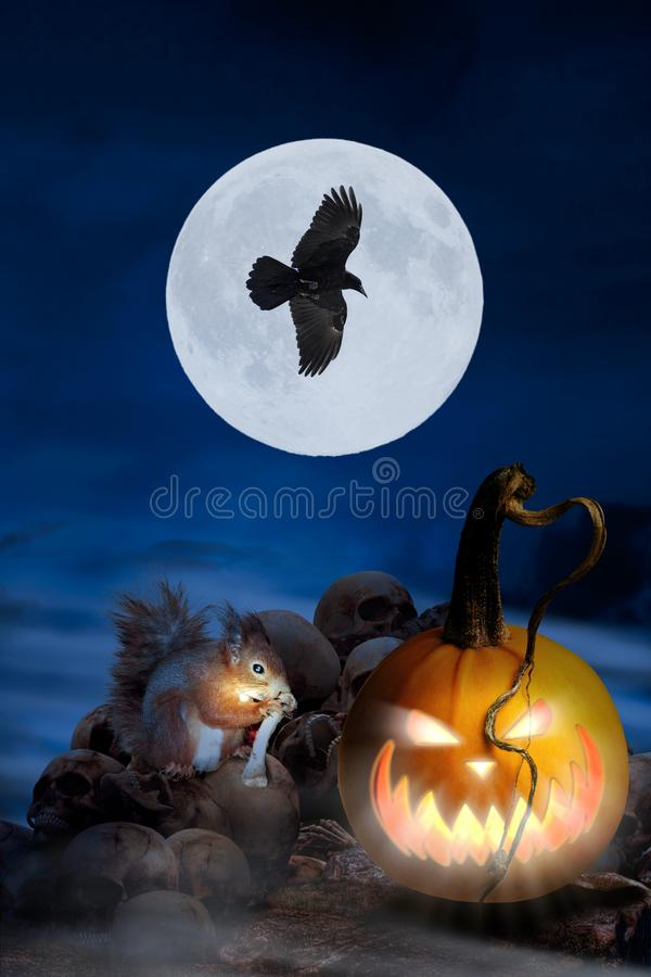 Halloween greeting card with a squirrel stock images