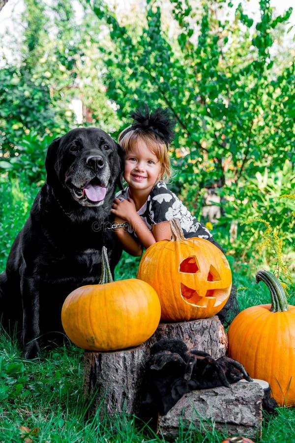 Halloween Het kind kleedde zich in zwarte dichtbij Labrador tussen hefboom-o-lantaarn decoratie, truc of behandelt Meisje met hon royalty-vrije stock foto's