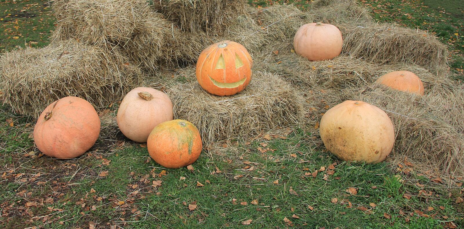 Halloween holiday, lined pumpkins royalty free stock images