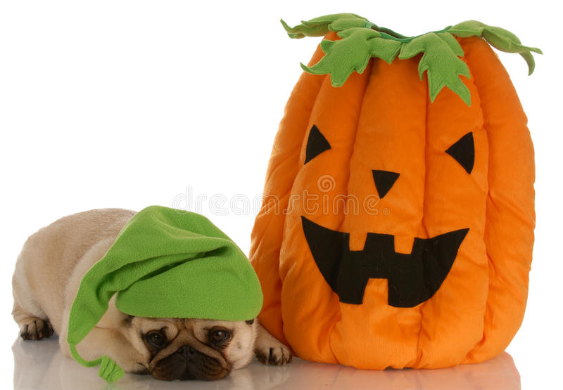 Halloween-Hund stockfotos