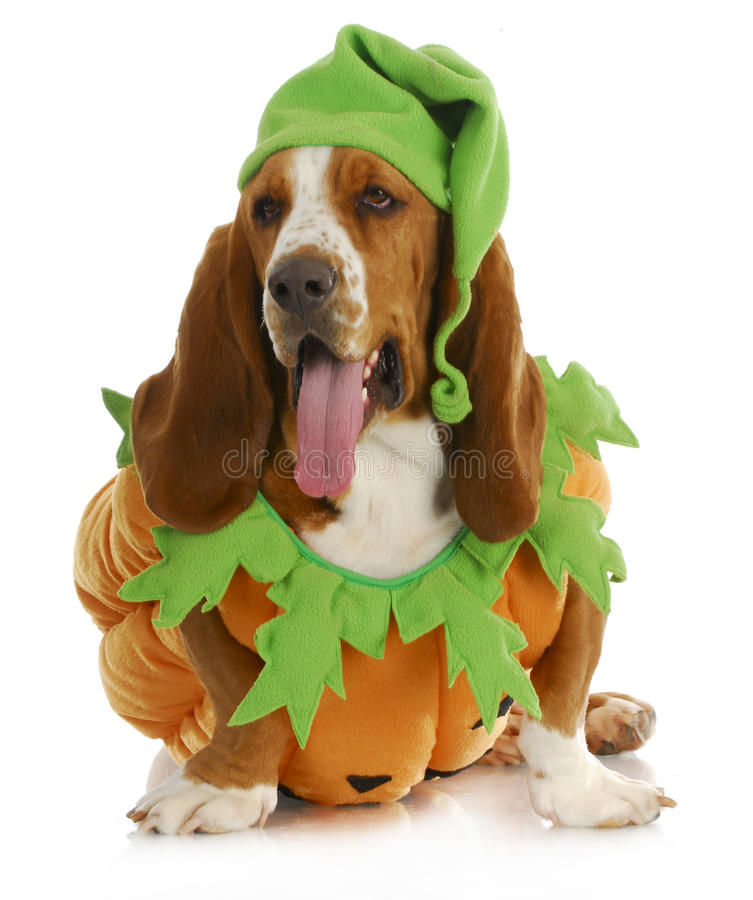 Halloween-Hund lizenzfreie stockfotos
