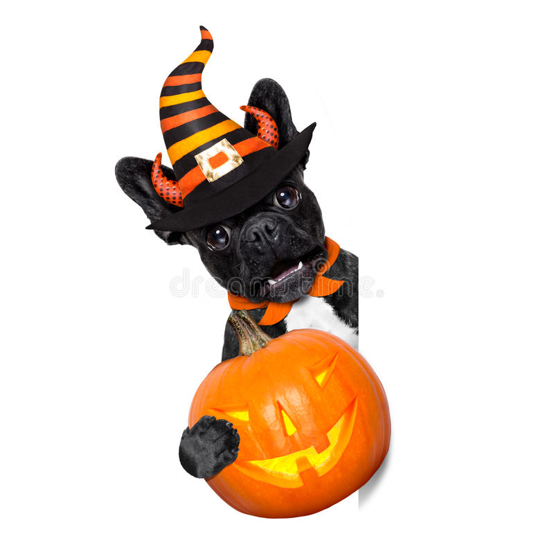Halloween-Hundefahne lizenzfreie stockfotografie