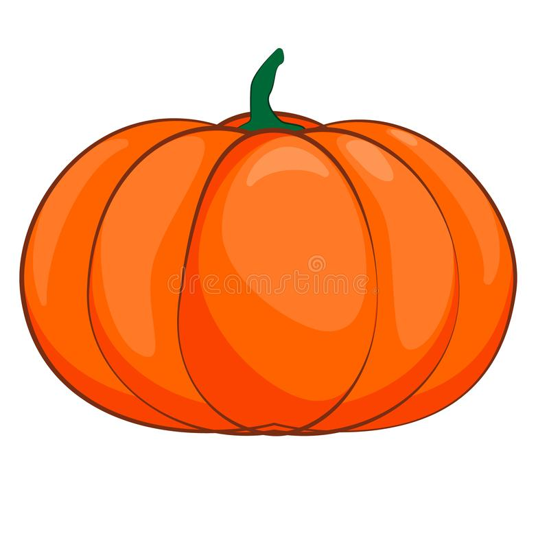 Halloween isolated pumpkin in vector. Autumn dall thanksgiving food for vegetarian. Natural seasonal plant from farm or vector illustration