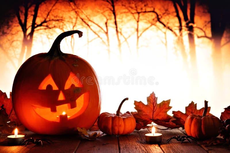 Halloween Jack o Lantern against spooky orange lit forest royalty free stock photography