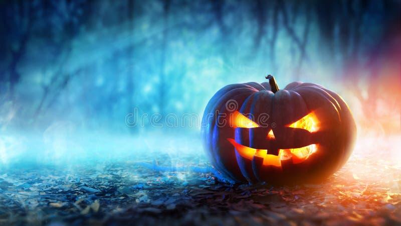 Halloween-Kürbis in einem mystischen Wald stockfotografie