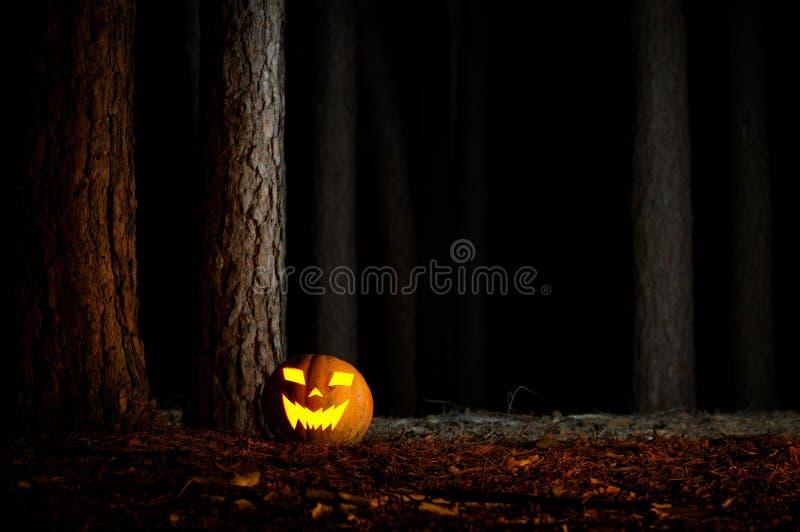 Halloween-Kürbis in einem Wald nachts lizenzfreie stockfotos