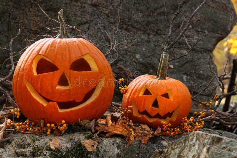 Halloween-Kürbise auf Felsen im Wald stockfotografie