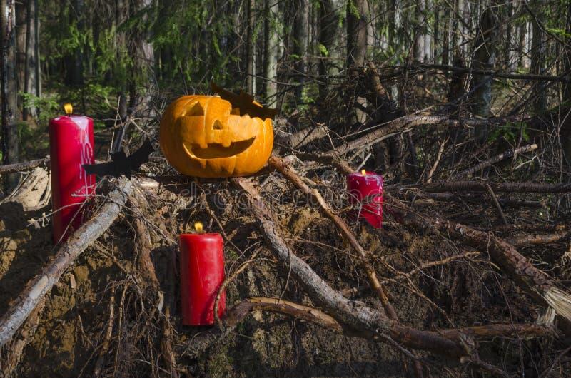 Halloween-Kürbishauptsteckfassungslaterne mit brennenden Kerzen mit Schlägern im furchtsamen tiefe Nachtwald stockfoto